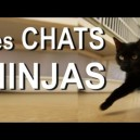 Les chats ninja