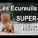 Les écureuils super-héros