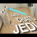 Les chats jedi