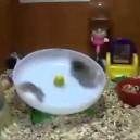 2 Hamsters une roue